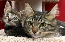 子猫を育てる猫