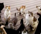 食事時間になると玄関前に続々と集まってくる12匹の猫。ドアを開けた瞬間、大変なことに… (゚Д゚;)!
