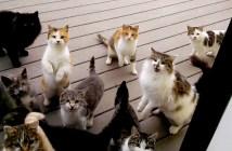 ドアの前の猫達