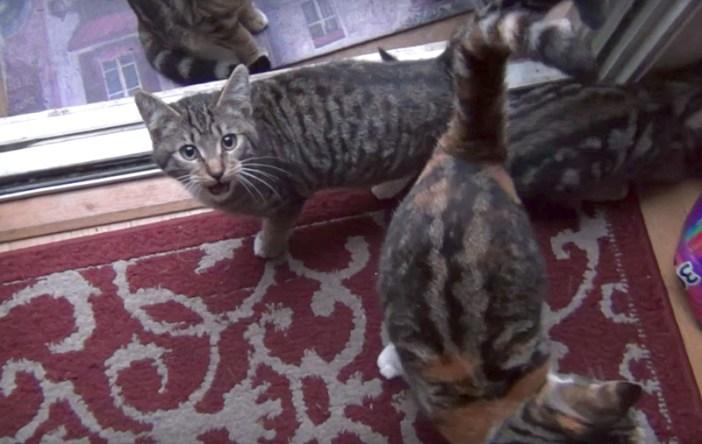 話しかける猫