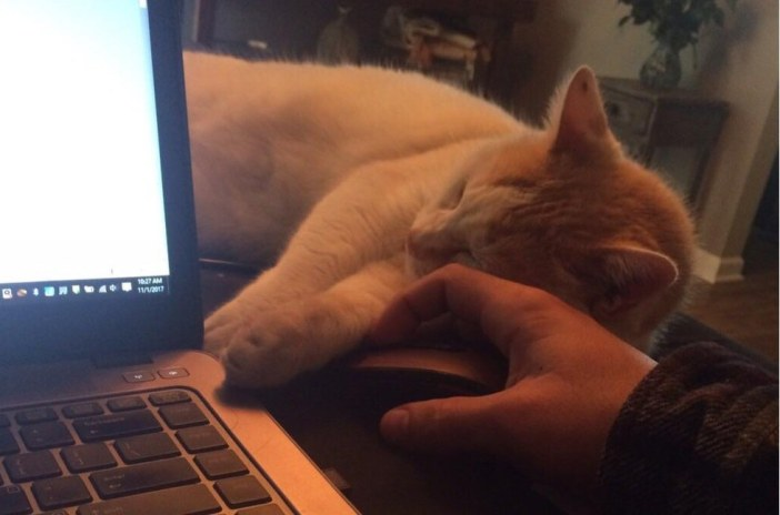お仕事する猫