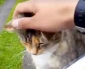 「待ってたにゃ〜ん♪」毎日、郵便配達員に会いに来る猫さん。その一途な姿が可愛すぎて… (*´ω`*)♡