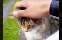 郵便屋さんと猫