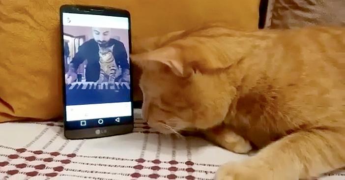 ピアノ演奏を聴く猫