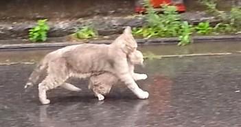 雨の中を移動する猫の親子
