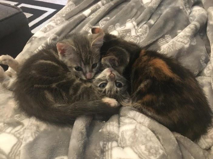 3匹の子猫兄弟