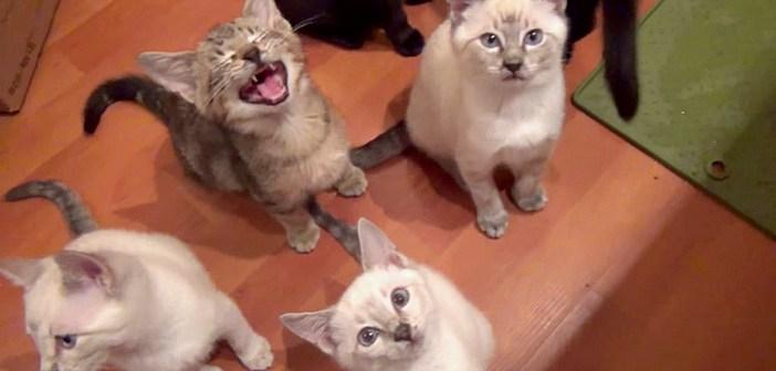 ご飯を要求する子猫達