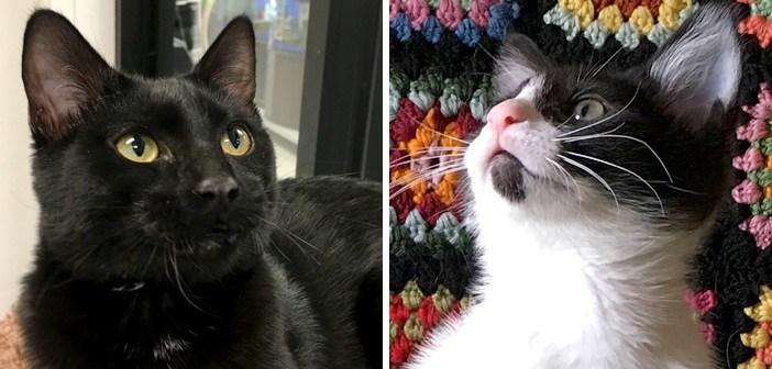 親友同士の猫