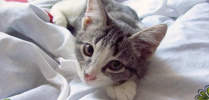 起こしに来た子猫