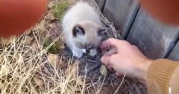 職場近くの草むらで子猫を発見。不安で鳴き止まない子猫をそっと撫でると、幸せそうな姿を見せてくれた (5枚)