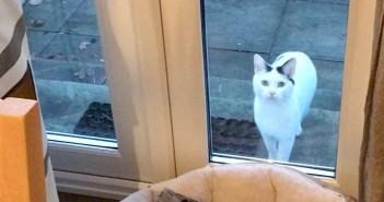 窓の外で待つ猫
