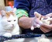 おばあちゃんの膝の上で、まんじゅう作りを見つめる猫さん。穏やかな時間の流れに心がホッと温まる (*´ェ`*)