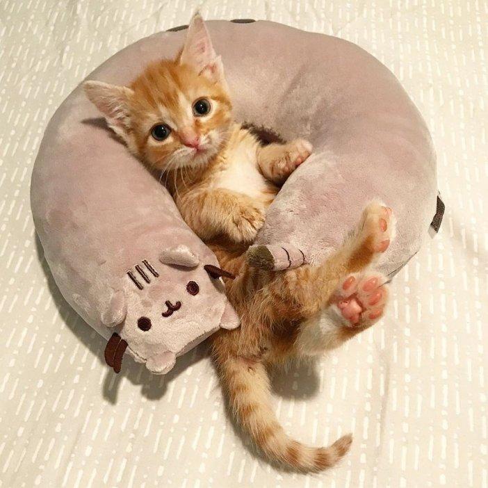 巻かれる子猫