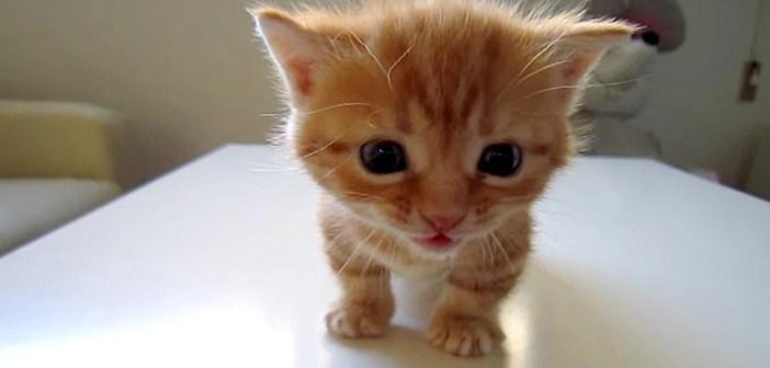 しゅんとする子猫