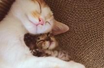 幸せな2匹の猫