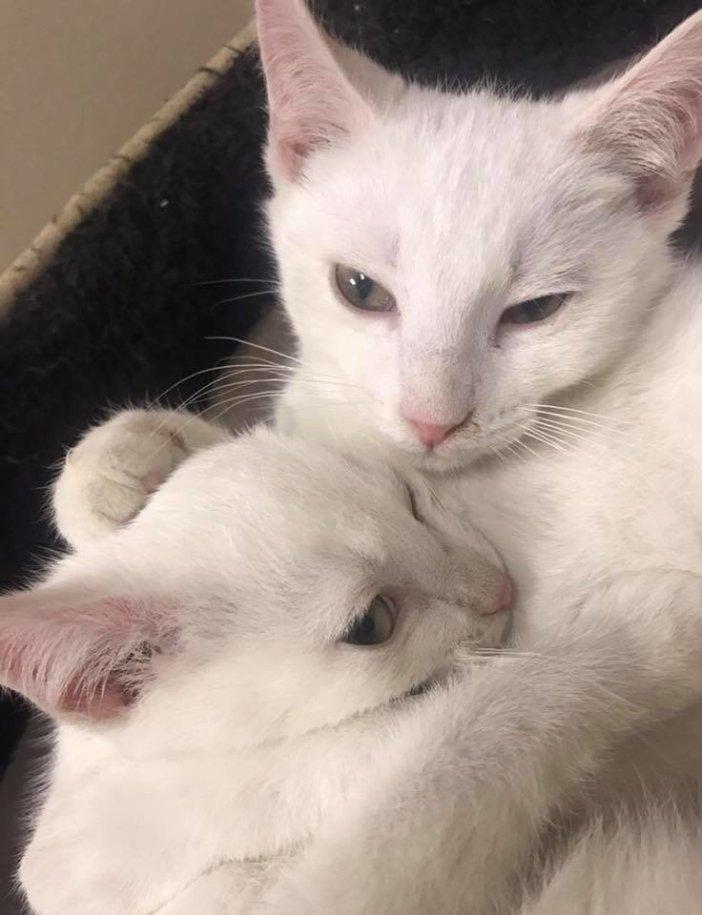 ハグする猫