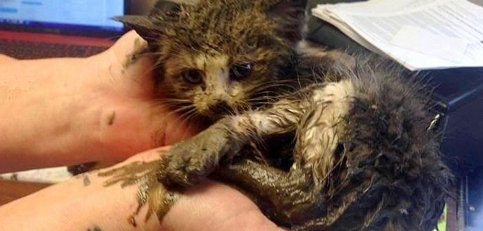 泥の中で動けなくなっていた子猫を発見! みんなの力で救い出されると、幸せいっぱいの愛らしい姿を見せてくれた♪