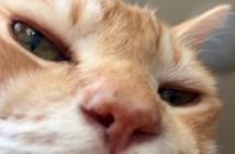 喉を鳴らす猫
