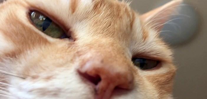 起きたら上にいる猫さん。とっても幸せを感じているようで、喉のゴロゴロが凄いことに ( *´艸`)♡