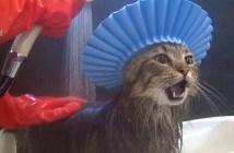 シャンプーハット猫