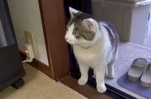 家の中に入って来た猫
