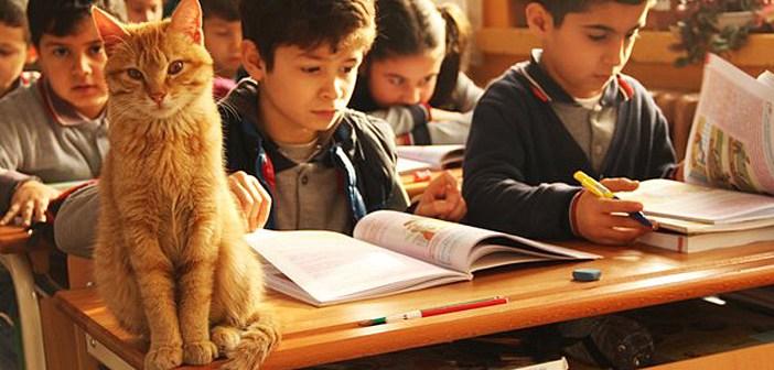 ある日、小学3年生の教室に迷い込んだ野良猫。どうやらその場所が気に入ったようで、子供達と一緒に勉強を始める♪