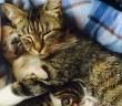子犬を育てる母猫