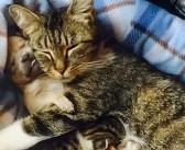 幼くして保護された独りぼっちの子犬。保護先で出会った母猫に温かい愛を教わる