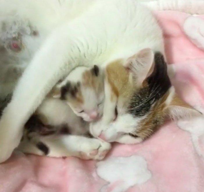 子猫を抱きしめる母猫