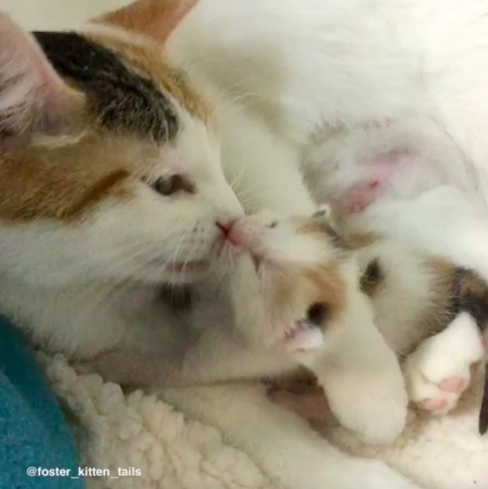 仲良しな子猫と母猫