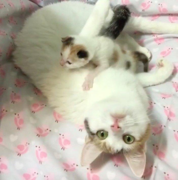 くつろぐ母猫と子猫