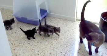 勘違いした子猫たち