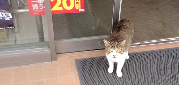 コンビニに寄ったら、お店の中から1匹の猫が出てきた! 近づいてみると、大きな声で話しかけてきた ( *´艸`)♡