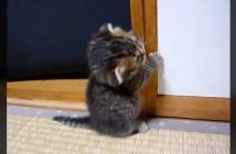 立ち始めた子猫