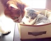 「ここ使ってください」お年寄り猫に迷わずベッドを譲る猫。その優しい気遣いに、心がホッと温まる (*´ω`*)