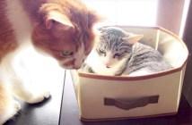 ベッドを譲る猫