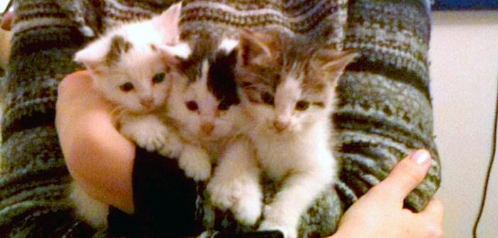 抱えられる3匹の子猫