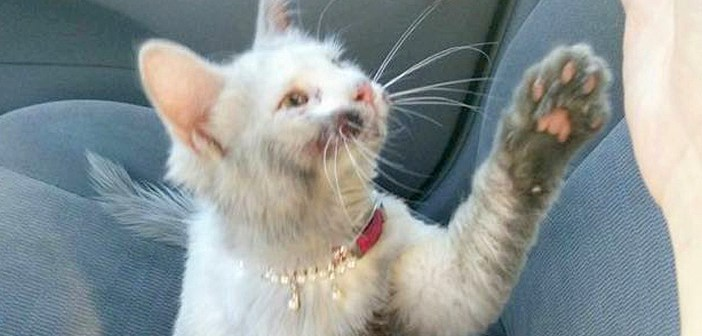 全身が汚れた状態で路上にうずくまっていた子猫。4回のお風呂とたくさんの愛情で、幸せな子猫へと生まれ変わる!