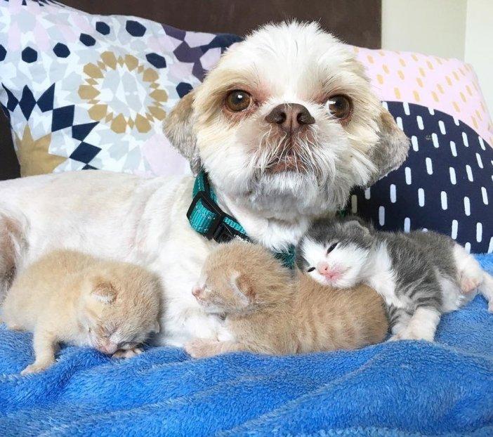 幸せな犬と子猫