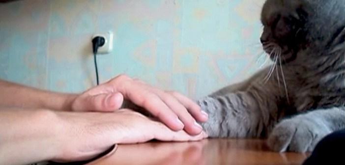 手を乗せる猫