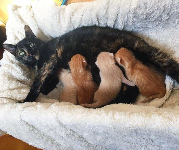 仲良し猫の親子