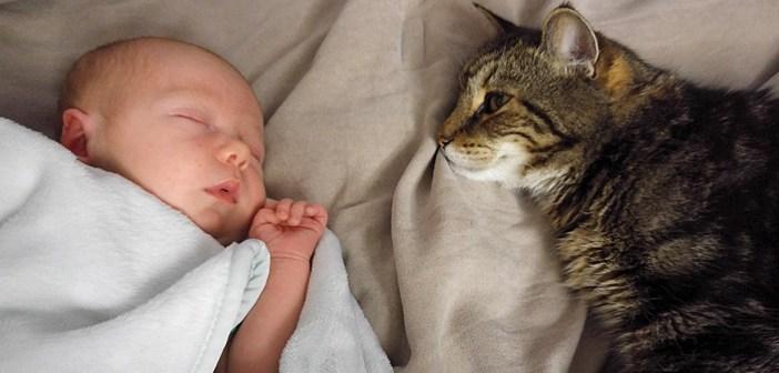 赤ちゃんのことが好きな猫