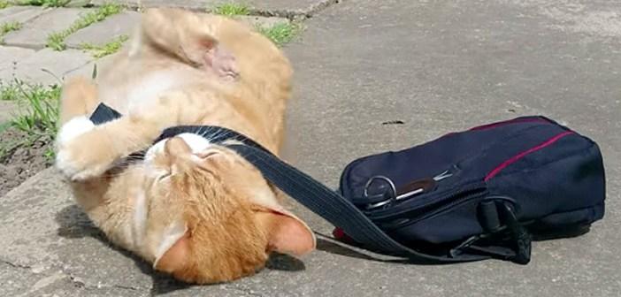 仕事に行かせたくない猫