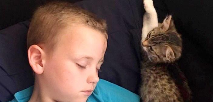 「ボクがついてるからね」保護されたばかりの幼い子猫。気分障害の男の子に寄り添い、不安な心を癒し続ける