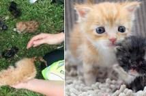 火事から助け出された子猫