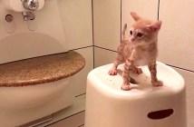 お風呂好きの子猫
