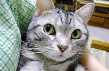 表情が豊かな猫