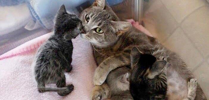 後ろ足が動かなくなり、死の淵を彷徨っていた母猫。お腹の赤ちゃんへの深い愛情が、母猫の命を繫ぎ止める
