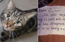 猫とメッセージ
