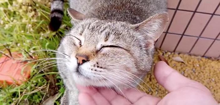 ナデナデ好きの猫